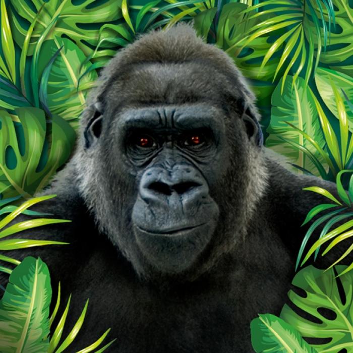 Meet Glen the Gorilla!